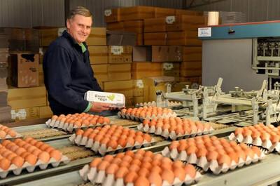 "Egg Tray x 30 Pcs | Fresh Free Range ""Green eggs"" 700gm - Victoria"