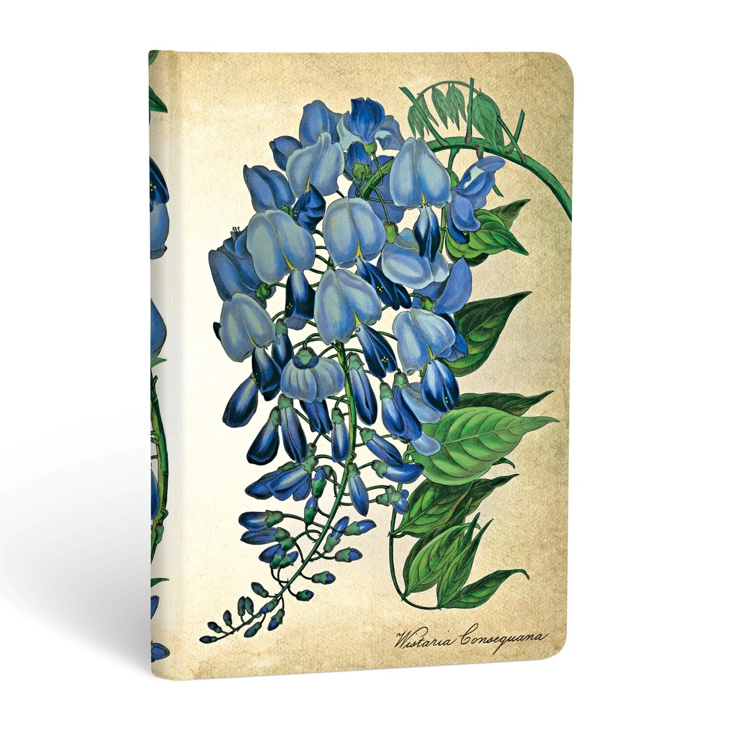 Journal, Unlined, Mini Hardcover Blooming Wisteria - Painted Botanicals
