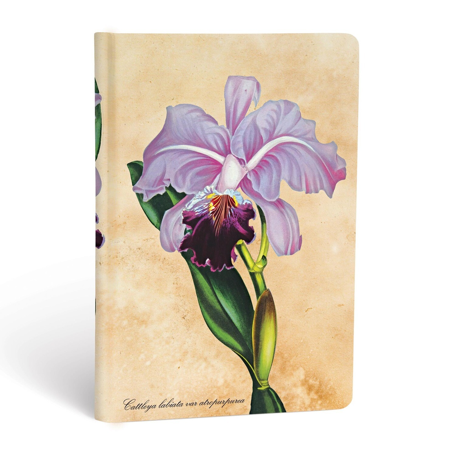 Journal, Unlined, Mini Hardcover Brazilian Orchid - Painted Botanicals