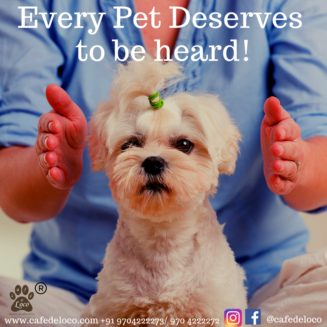 Communicate with your pet
