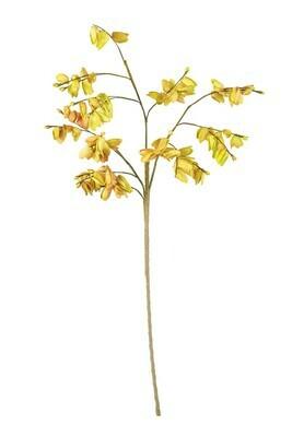 Ylw Botanica 3173