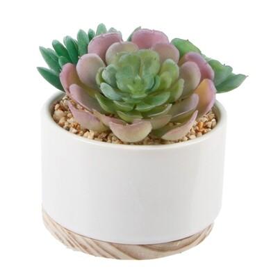 Artificial Succulent in Ceramic Base - Wht