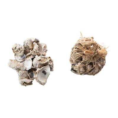 Oyster Shell in Bag