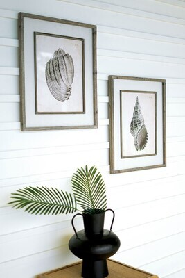 Framed B/W Shell Print
