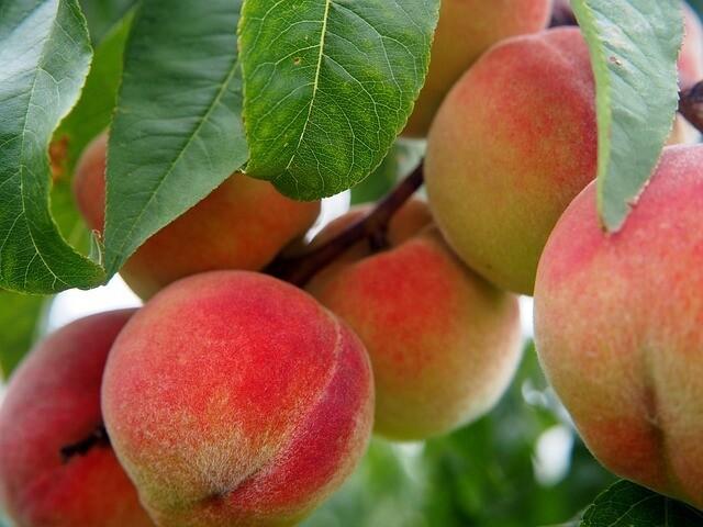 Ripe Peach White Balsamic