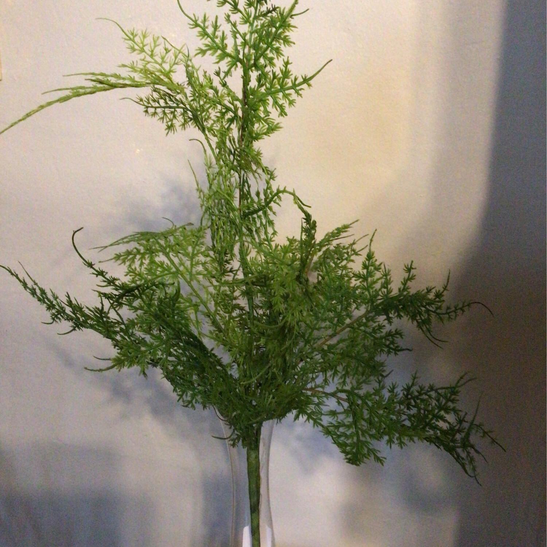 18in Asparagus Fern