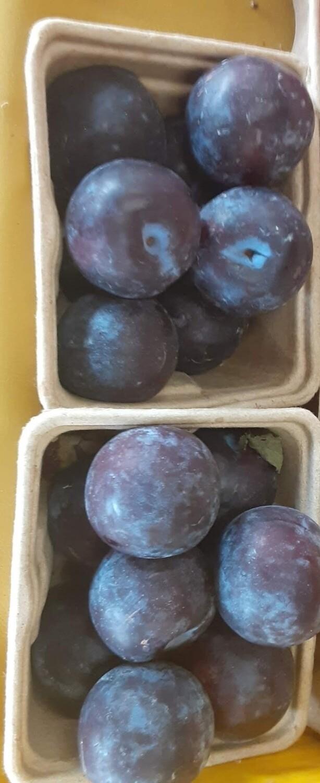 Farmers Market: Basket of Purple Plums