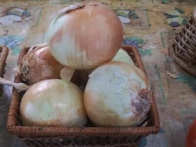 Farmers Market: Basket Of Onions