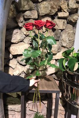Lange rote Rose (Red Naomi)   ...Sie legen die Menge fest!