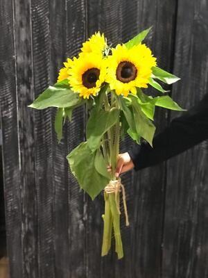 Fünf Sonnenblumen pur