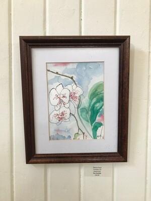 Pen Orchids by Marcia Hook