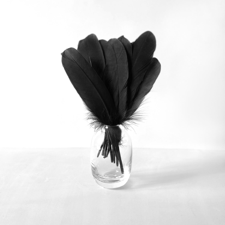 Гусиные перья черные ровные 20шт.