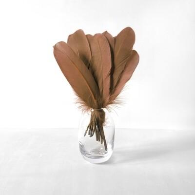 Гусиные перья коричневые ровные 20шт.