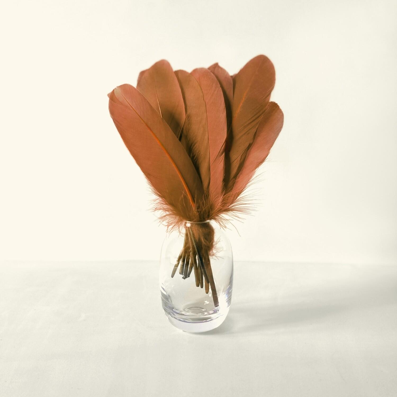 Гусиные перья рыжие ровные 20шт.
