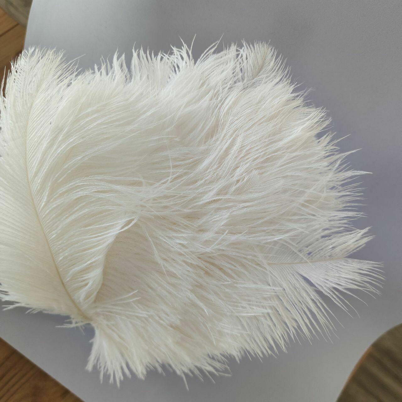 Перо страуса белое 40 - 45 см.