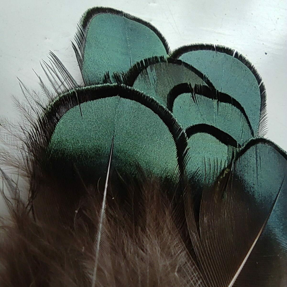 Перья павлина натуральные 3-8 см. 10 шт.