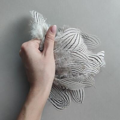 Перья фазана серебряного 5-10 см. 10 шт.