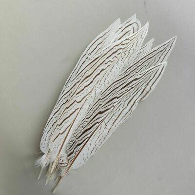 Перья фазана серебряного 25 см.