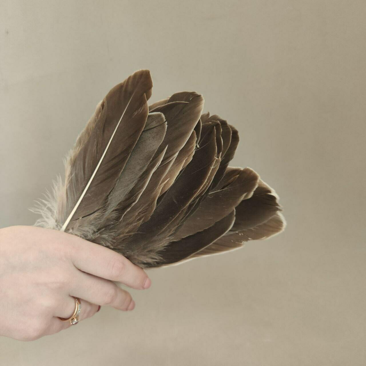 Гусиные перья естественные 2 сорт 20 шт.