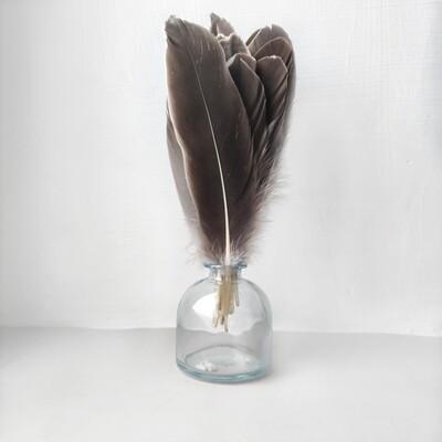 Гусиные перья естественные ровные 20шт.