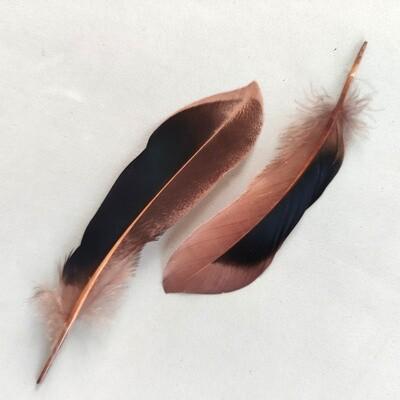 Перья кряквы коричневые 10 шт.
