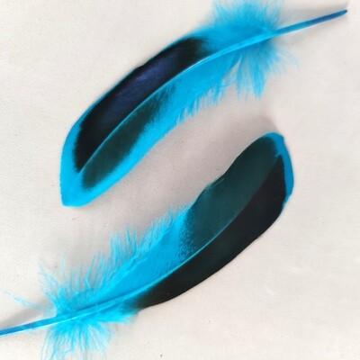 Перья кряквы голубые 10 шт.