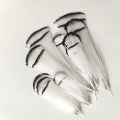 Перья алмазного фазана 5-9 см. 10 шт.