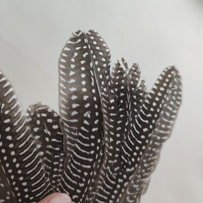 Перо цесарки натуральное 2 сорт 1 шт.
