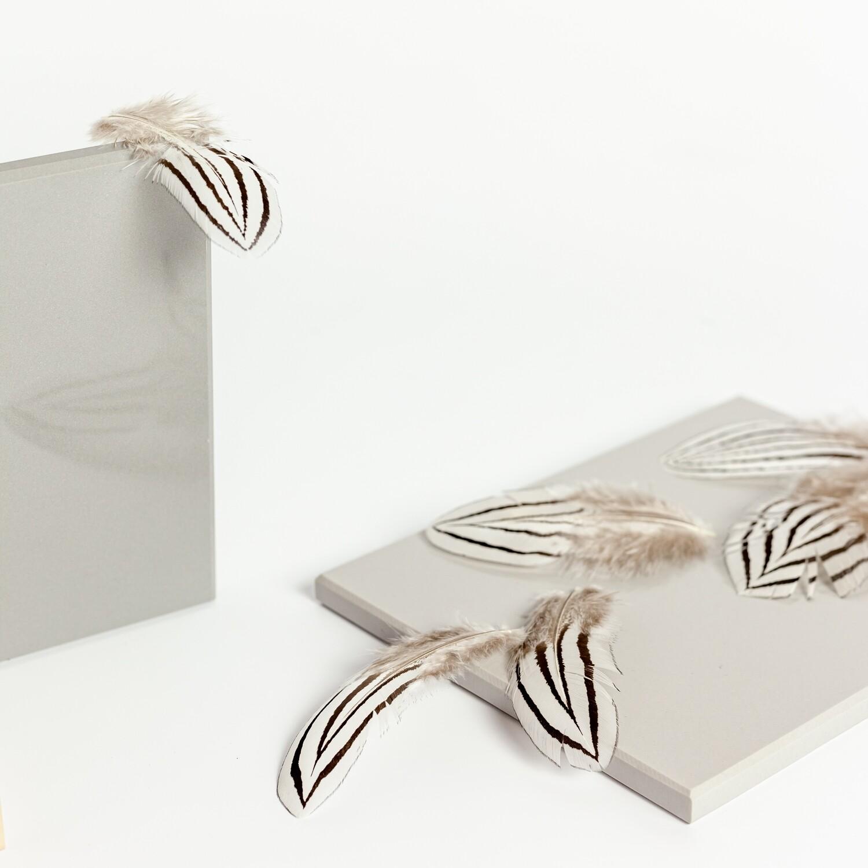 Перья фазана серебряного 4-7 см. 10 шт.