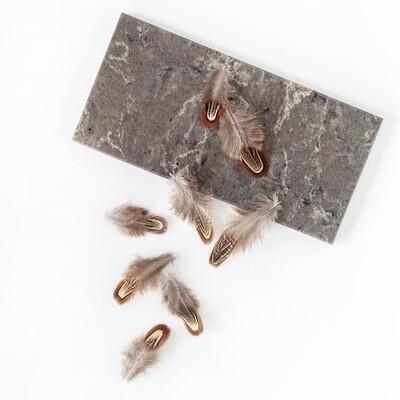 Перья фазана натуральные 3-8 см. 10 шт.