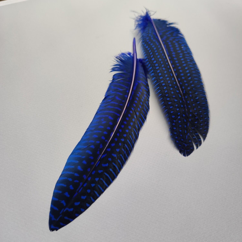 Перо цесарки синие 15-20 см.
