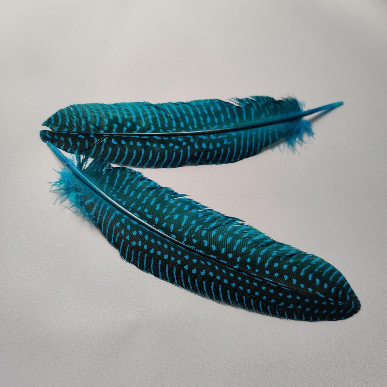 Перо цесарки голубые 15-20 см.