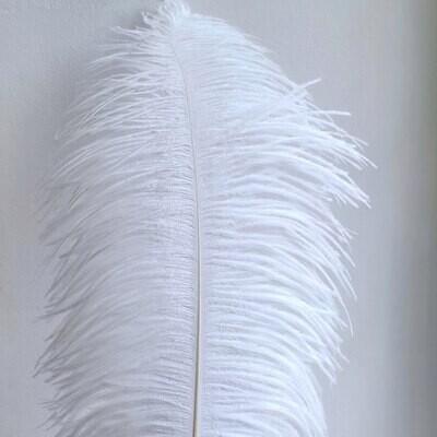 Перо страуса белое 55 - 60 см.