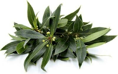 Fresh Bay leaves (50g)