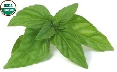 Basil Organic Essential Oil - Ocimum basilicum BULK