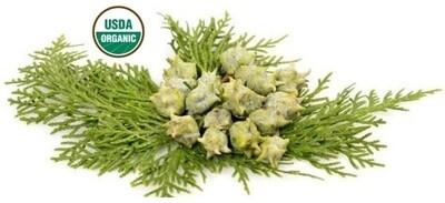 Cypress Organic Essential Oil - Cupressus sempervirens