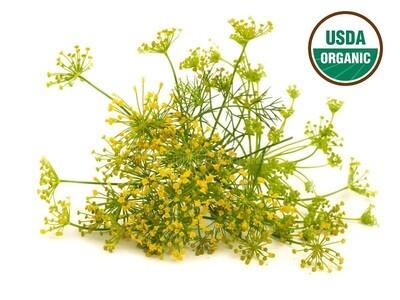 Fennel Organic Essential Oil - Foeniculum vulgare