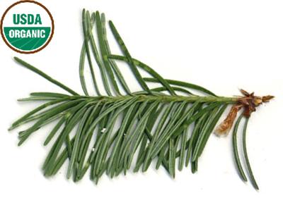 Fir Balsam Organic Essential Oil - Abies balsamica