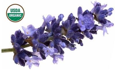 Lavender Organic Essential Oil - Lavandula angustifolia