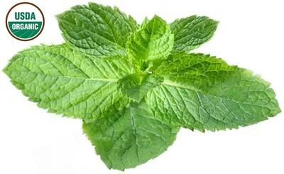 Peppermint Organic (Cornmint) Essential Oil - Mentha arvensis