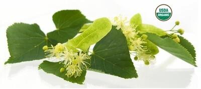 Tea Tree Organic Essential Oil - Melaleuca alternifolia
