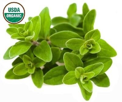 Marjoram Organic Essential Oil - Origanum majorana