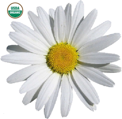 Chamomile German Organic 5% Essential Oil Blend in Organic Carrier Oil