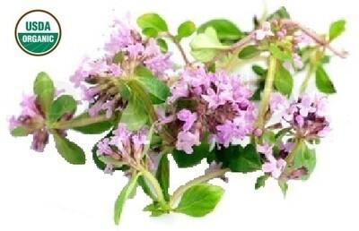 Thyme Red Organic Essential Oil - Thymus satureiodes
