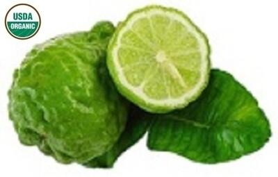 Bergamot Organic Essential Oil - Citrus bergamia