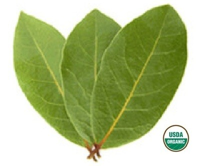 Bay Laurel Organic Essential Oil - Laurus nobilis
