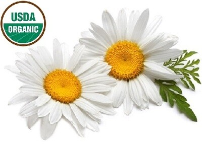 Chamomile Roman Organic 5% Essential Oil Blend in Organic Carrier Oil