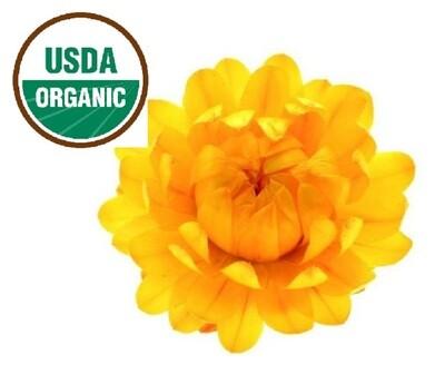 Organic Helichrysum Hydrosol Floral Water (Immortelle) 2oz