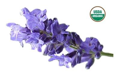 Organic Lavender Hydrosol Floral Water 2oz