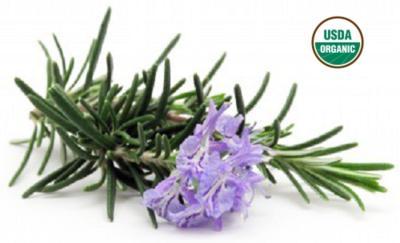 Organic Rosemary Hydrosol Floral Water 2oz